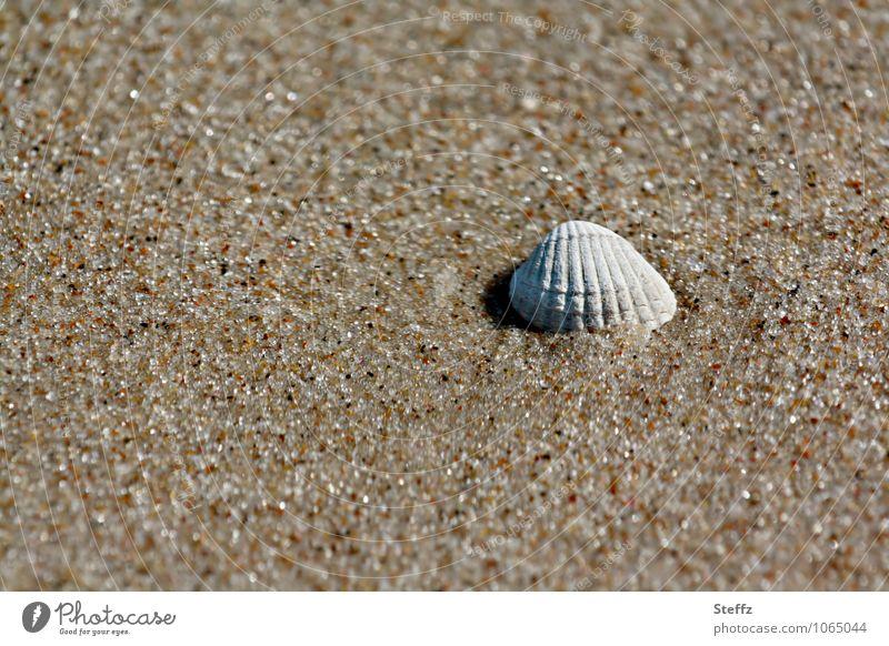 gestrandet harmonisch Wohlgefühl ruhig Strand Natur Sand Sommer Sandstrand Muschel Muschelschale maritim natürlich schön Urlaubsstimmung Sommergefühl beige