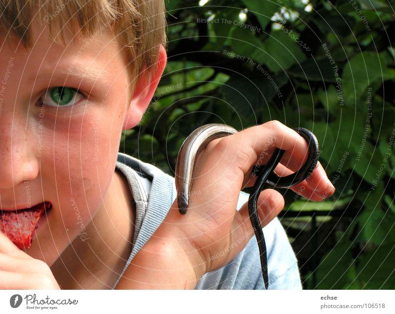 schlangenjunge Kind Auge Junge gefährlich tierisch Schlange Echsen Reptil provokant besessen Blindschleiche
