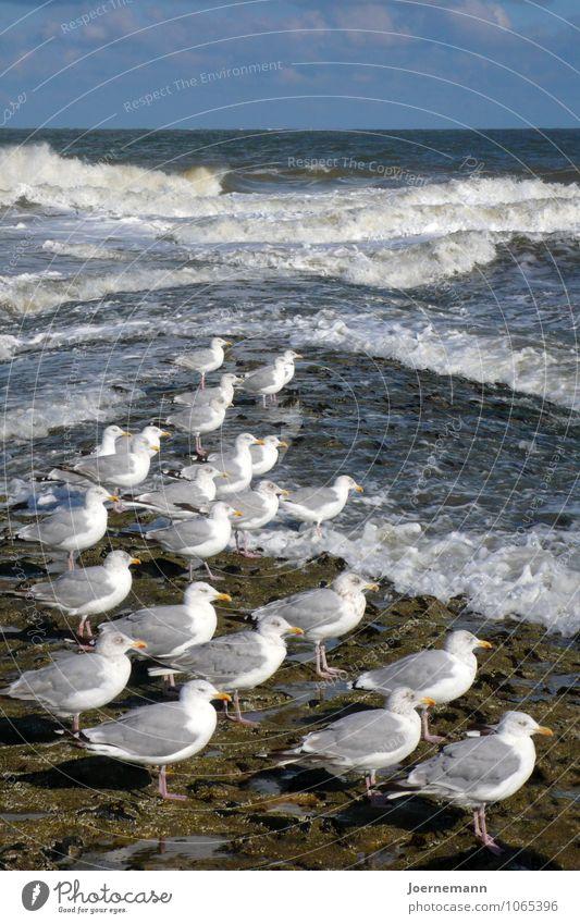 Möwenparade Natur Wasser Sommer Erholung Meer Landschaft ruhig Strand Umwelt Leben Küste Schwimmen & Baden Sand Zufriedenheit Wellen Tiergruppe