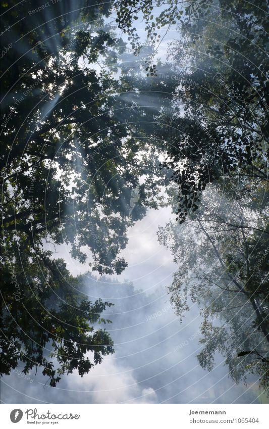 Sonnengeäst Natur Luft Himmel Wolken Sonnenlicht Sommer Schönes Wetter Baum Wald leuchten Wachstum Freundlichkeit glänzend Wärme weich blau Glück Zufriedenheit