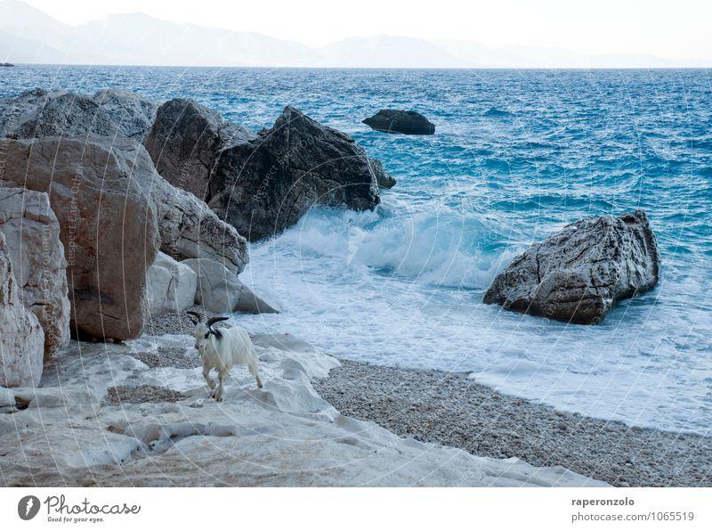 Bock auf Landgang Natur Ferien & Urlaub & Reisen blau Meer Einsamkeit Landschaft Strand Ferne Küste Freiheit Wellen laufen Abenteuer Bucht Flucht Trennung
