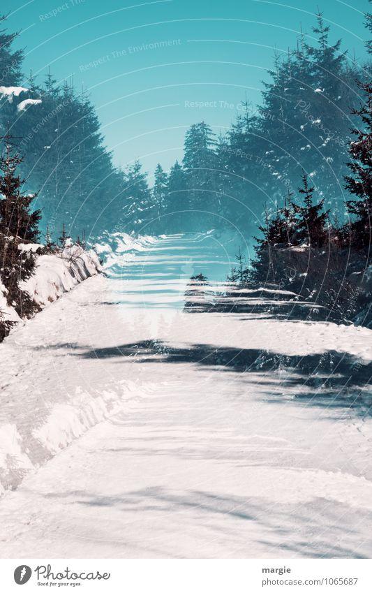 Imaginärer Winterweg Himmel Natur Ferien & Urlaub & Reisen blau grün weiß Wasser Baum Erholung Landschaft Wald Umwelt Schnee Wege & Pfade Gesundheit