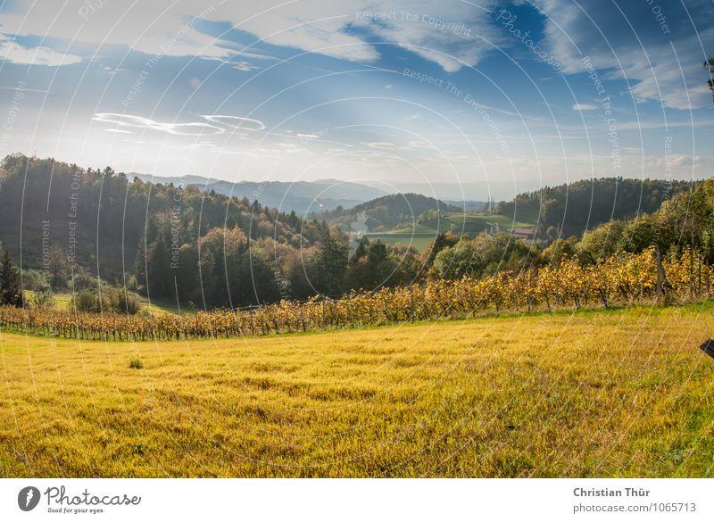 Herbstlich Natur Ferien & Urlaub & Reisen Pflanze Baum Erholung Landschaft Wolken Tier Ferne Berge u. Gebirge Umwelt Wiese Gras Freiheit Felsen