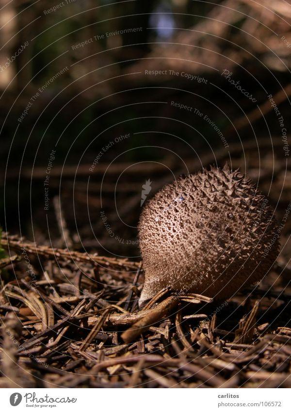 Ein ??? steht im Walde dunkel Waldboden Tannennadel Ausflug keine Ahnung Notarzt Bovisten Ernährung Freizeit & Hobby Herbst Pilz Pilze sammeln Pilzgericht