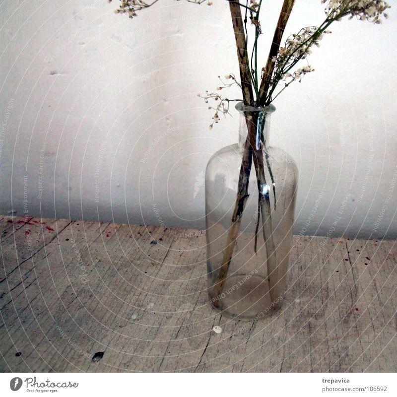 vase alt Blume Pflanze Herbst Wand Holz Traurigkeit braun dreckig Glas Dekoration & Verzierung Flasche trocken durchsichtig Zweig Vase