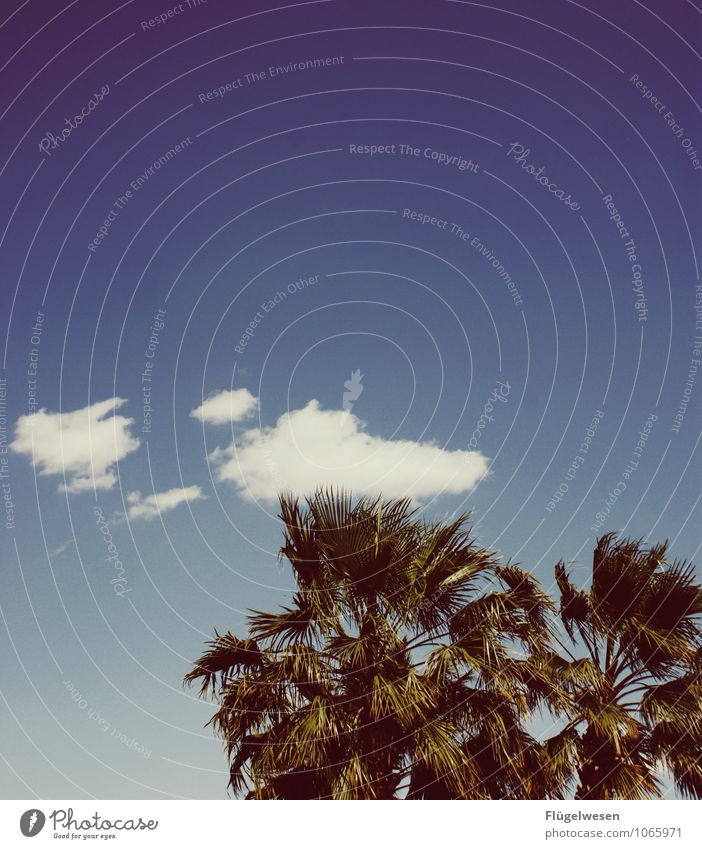 Wolke küsst Baumkrone Himmel Wolken Ast Zweig Küssen Sommer Wald Natur Wind