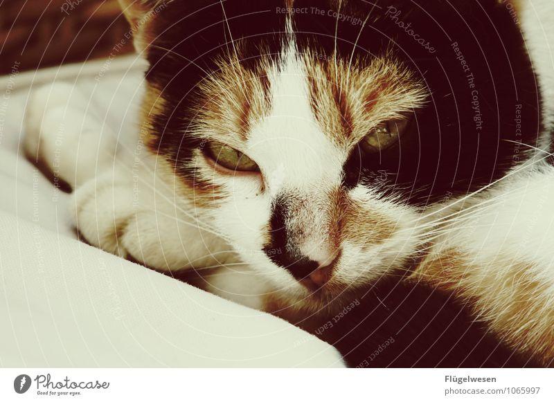 Ich mag keine Katzen Tier Haustier 1 entdecken Erholung Katzenbaby Katzenauge Katzenkopf Hauskatze Katzenohr Katzenpfote Katzenzunge Katzenfutter Katzenfreund