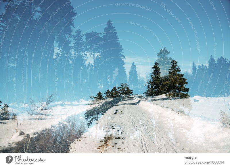 Imaginäre Winterlandschaft mit Spuren Ferien & Urlaub & Reisen Schnee Winterurlaub Wintersport Natur Landschaft Himmel Sonnenlicht Klima Schönes Wetter Eis