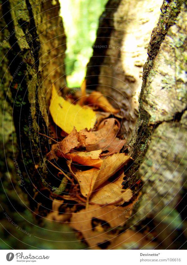 Der Herbst ist bunt ... Baum grün Blatt gelb Herbst braun Schönes Wetter Birke