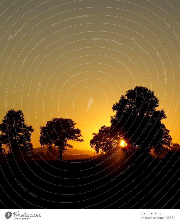 ich seh die welt in trümmern liegen Natur schön alt Himmel Baum Sonne ruhig gelb Wald dunkel Herbst Landschaft orange Wetter Horizont Kreis