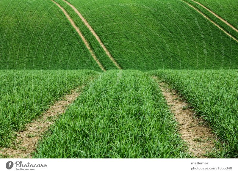 Fahrspuren in landwirtschaftlichem Feld Landwirtschaft Forstwirtschaft Umwelt Natur Landschaft Pflanze Grünpflanze Nutzpflanze Wiese Hügel Linie Streifen