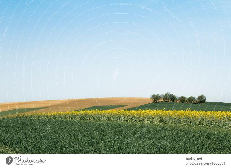 Landschaft mit grafisch angeordneten Feldern Landwirtschaft Forstwirtschaft Umwelt Natur Pflanze Erde Himmel Wolkenloser Himmel Klima Hügel ästhetisch blau gelb