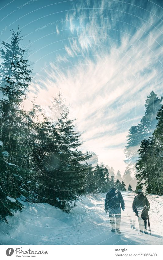 Imaginäre Winterwanderung Himmel Natur blau weiß Baum Sonne Wolken ruhig Wald Senior Wege & Pfade Bewegung Schnee Gesundheit gehen