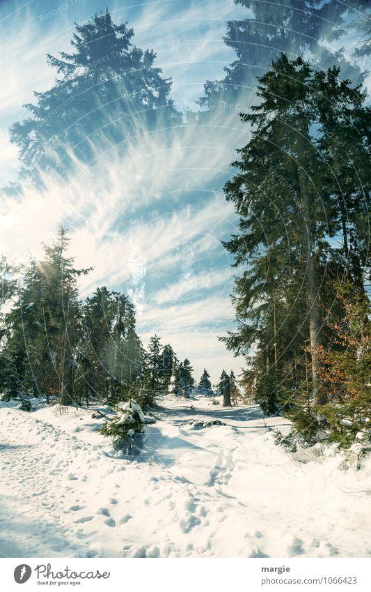 Imaginäre Winterwege Himmel Natur Ferien & Urlaub & Reisen blau weiß Sonne Baum Erholung Einsamkeit Landschaft Wolken Freude Wald kalt Bewegung