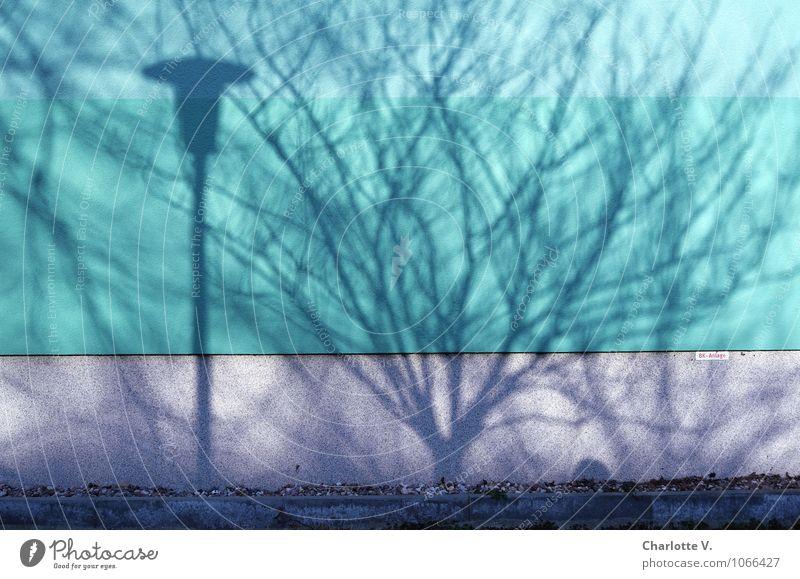Schattenwelt Sonnenlicht Schönes Wetter Baum Gras Stadt Menschenleer Mauer Wand Beton authentisch außergewöhnlich grau grün schwarz bizarr Farbe Schattenspiel