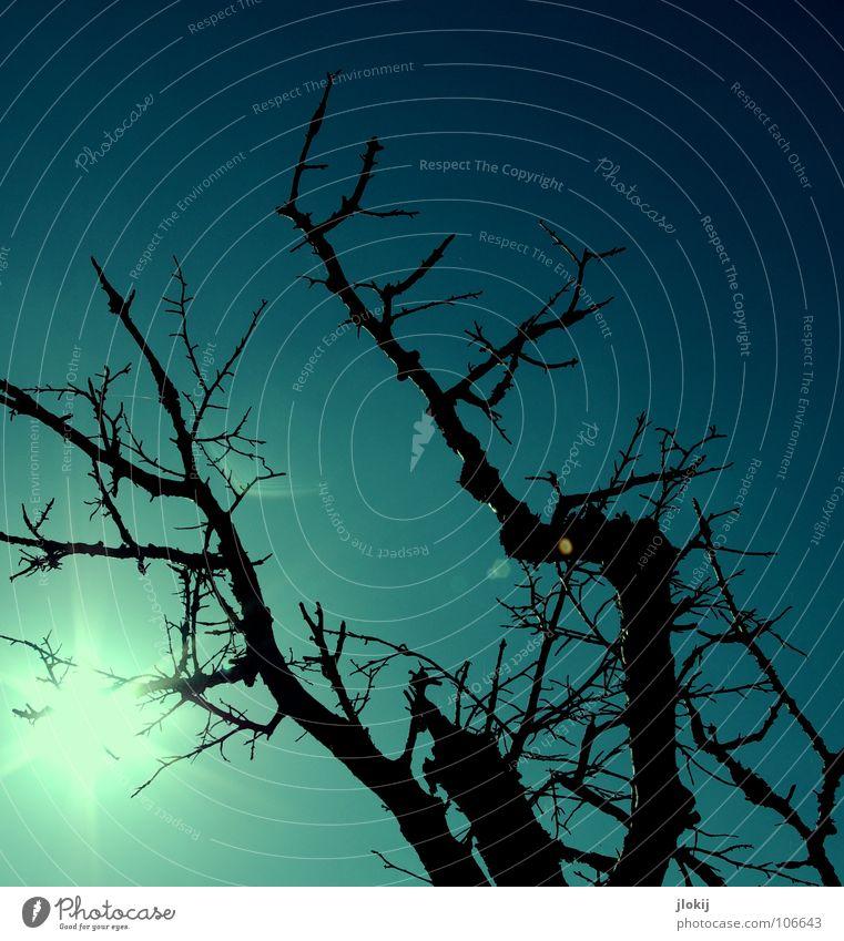 Blatt für Blatt... Sonnenuntergang Abend dunkel Licht Gegenlicht Baum Pflanze Spinnennetz Silhouette Tod Waldsterben Umweltverschmutzung verdorrt diffus Herbst