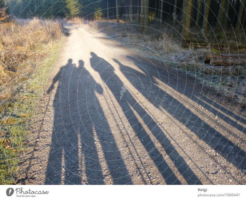 5 Walking-Damen... wandern Mensch Frau Erwachsene Weiblicher Senior Leben 60 und älter Umwelt Natur Landschaft Pflanze Winter Schönes Wetter Eis Frost Baum Gras