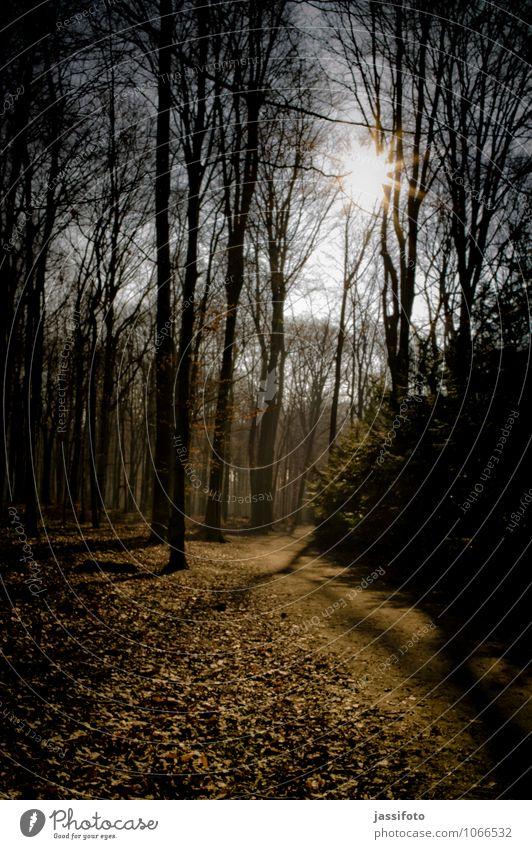 Waldweg Sonne Winter Natur Landschaft Pflanze Sonnenlicht Schönes Wetter Baum Wege & Pfade ästhetisch hell Wärme ruhig Dortmund Lichtstimmung Ruhrgebiet