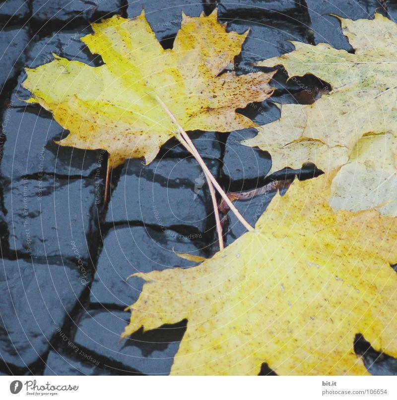 BLÄTTER wiederkommen auftauchen Blatt Ahorn kalt gelehrt braun Herbst Januar Februar Dezember November Ferne Fahrweg schmelzen Winter nußbraun Stengel Eischnee