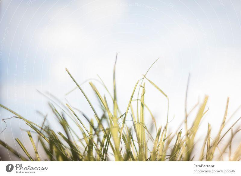 Frise Umwelt Natur Pflanze Himmel Wolken Sonne Sonnenlicht Frühling Sommer Klima Wetter Schönes Wetter Gras Garten Park Wiese ästhetisch hell natürlich blau