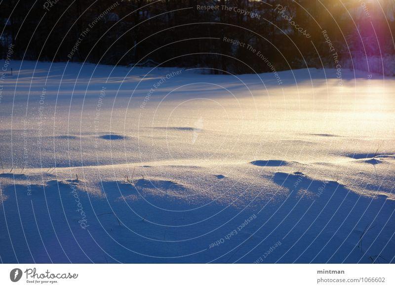 Reflexionen an einem sonnigen Wintertag Natur Landschaft Sonne Sonnenlicht Schnee träumen Einsamkeit kalt Farbfoto Außenaufnahme Licht Schatten