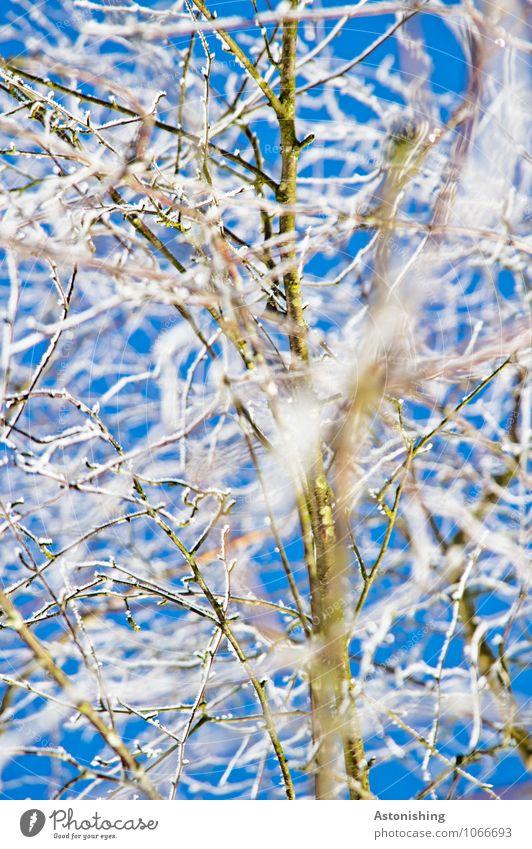 Zweige im Winter Himmel Natur blau Pflanze weiß Baum schwarz kalt Umwelt Schnee Eis Wetter stehen Klima Frost