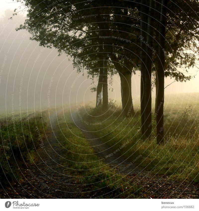 Früh am Morgen Nebel Steinweg bewachsen Gras Wiese Baum Landwirtschaft erleuchten grün grau trist Hoffnung ungewiss Zukunft Herbst Morgendämmerung Fog foggy