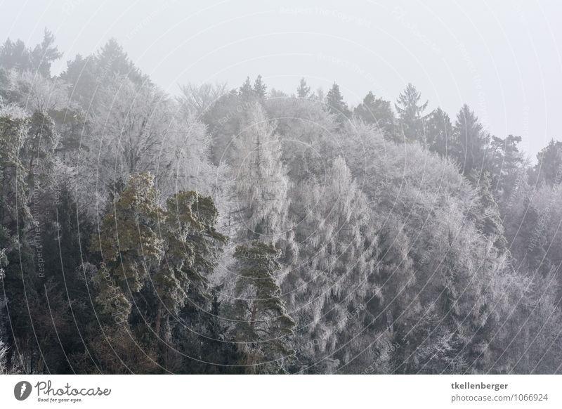 Frost so weit die Augen sehen Umwelt Natur grau Frauenfeld Stählibuck Wald Waldlichtung Waldrand Baumkrone Tanne Winter Schneefall Eiskristall Farbfoto