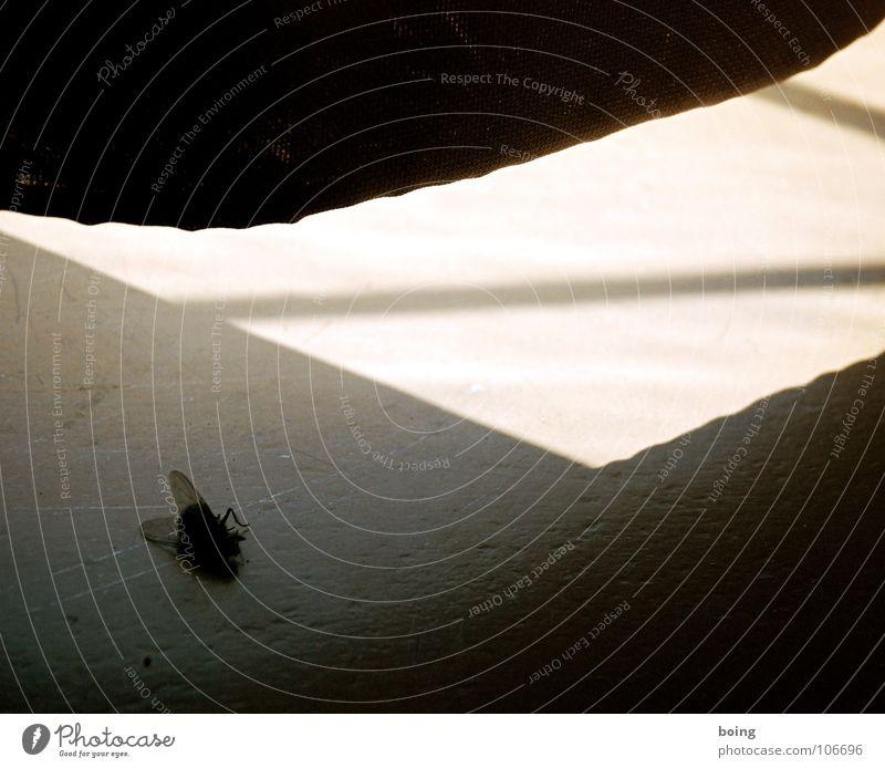 Vorhang dunkel ruhig Fensterbrett Gardine Himmelskörper & Weltall Konzert E-Mail Fliege Tod untergehen Sonne Schatten Flügel