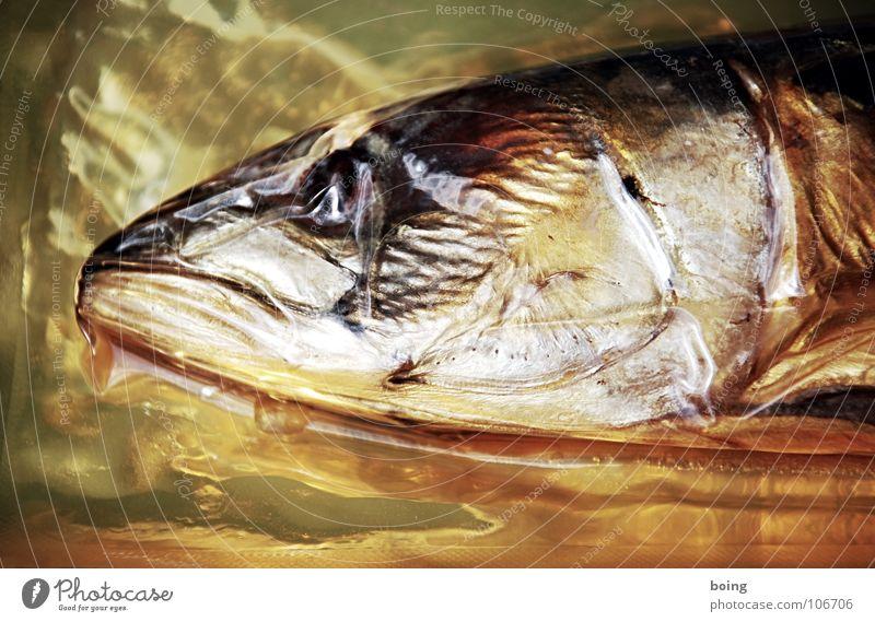 gegen den Strom macht auf Dauer eine trockene Haut Strand Küste gold Fisch tauchen Fett Fleisch fertig robust Makrele Kieme Trawler Überfischung