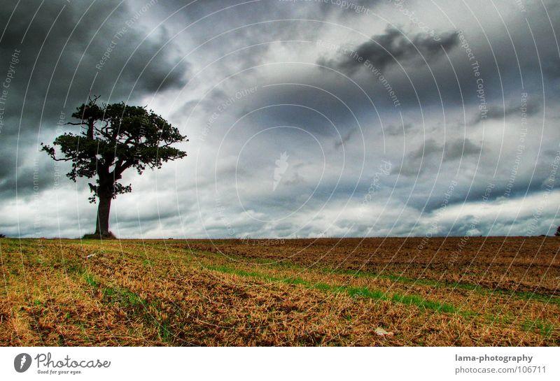 Lonesome Tree Getreide Landwirtschaft Forstwirtschaft Natur Himmel Gewitterwolken Herbst schlechtes Wetter Unwetter Wind Sturm Regen Baum Feld gruselig kalt