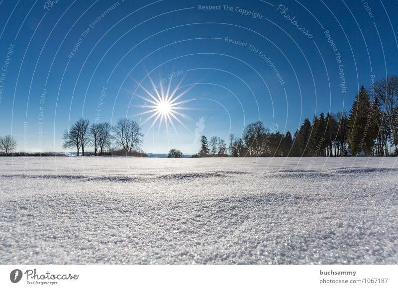 Wintersonne Ferien & Urlaub & Reisen Tourismus Sonne Skier Natur Landschaft Sonnenlicht Baum Wald glänzend blau weiß Baden-Württemberg Europa Jahreszeiten