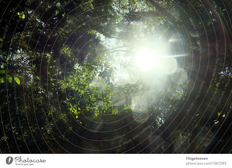 Lichtung Ferien & Urlaub & Reisen Tourismus Ausflug Abenteuer Ferne Freiheit Umwelt Natur Landschaft Klima Klimawandel Wetter Pflanze Baum Blume Gras Sträucher