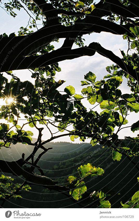einfach natürlich Himmel grün blau Blatt schwarz Wald Berge u. Gebirge Ast Baumstamm