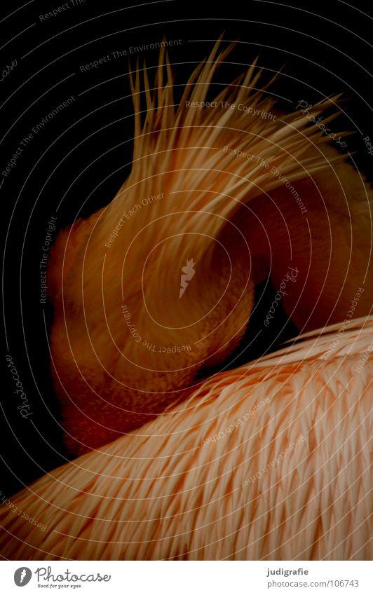 Pelikan schön ruhig Tier Farbe Traurigkeit Vogel elegant schlafen Trauer weich Feder Flügel Zoo gefangen Schnabel