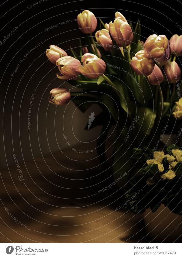 springtime Natur Pflanze schön Erholung Blume ruhig Freude Liebe Frühling Stil Glück Feste & Feiern Lifestyle Wohnung Raum Häusliches Leben