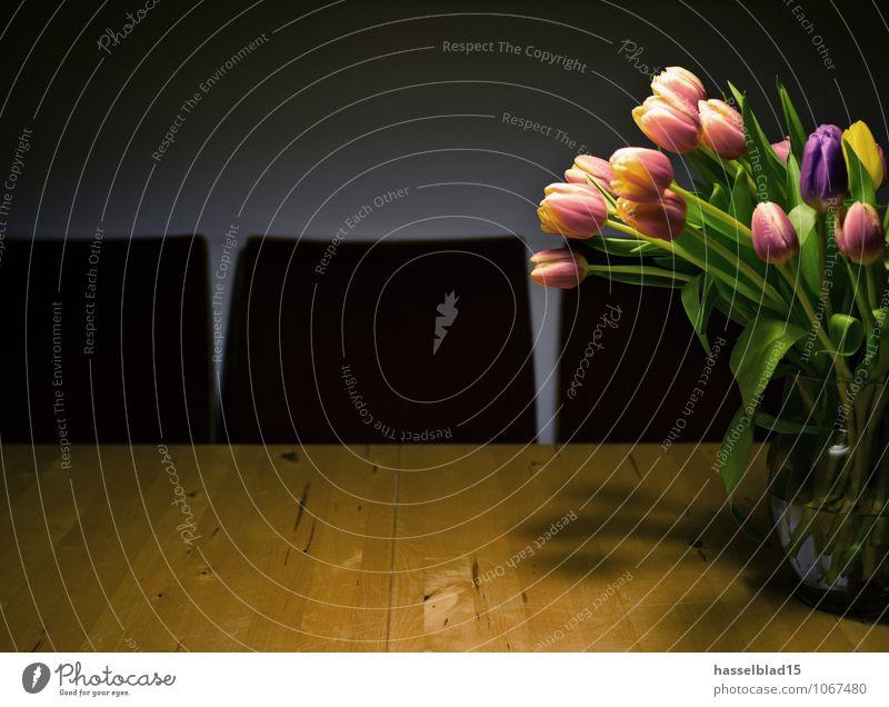growing to the left Pflanze schön Erholung Blume ruhig Freude natürlich Frühling Glück Feste & Feiern Lifestyle Wohnung Häusliches Leben Zufriedenheit Dekoration & Verzierung elegant