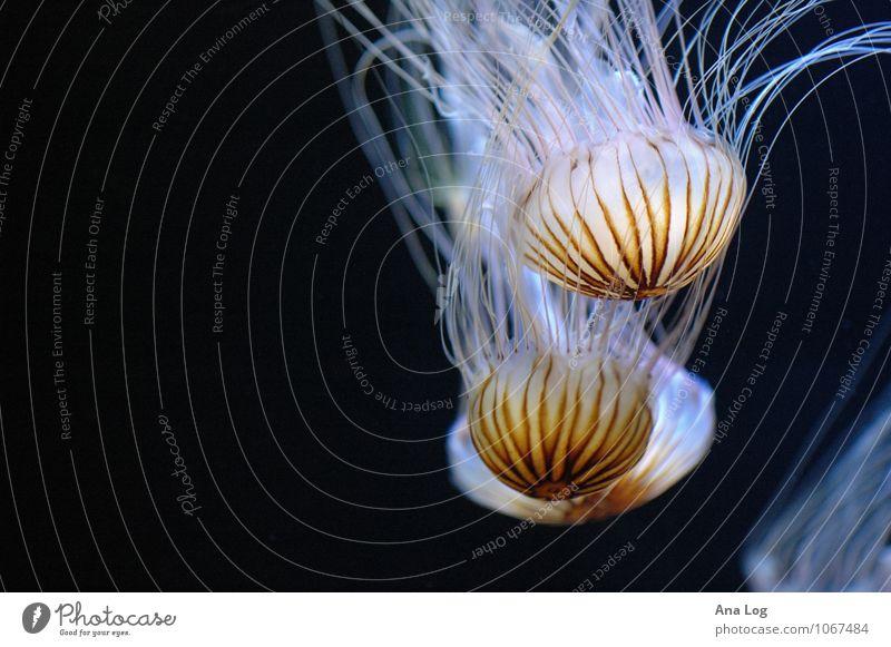 lichtblicke Natur Wasser Meer Qualle Aquarium 3 Tier Schwarm Lebensfreude Kunstlicht Licht Schatten Kontrast Lichterscheinung Totale Tierporträt Blick nach vorn
