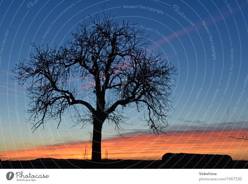 Baum mit Abendhimmel Natur Landschaft Luft Himmel Wolken Sonnenaufgang Sonnenuntergang Pflanze Feld blau mehrfarbig orange rosa rot schwarz Farbfoto