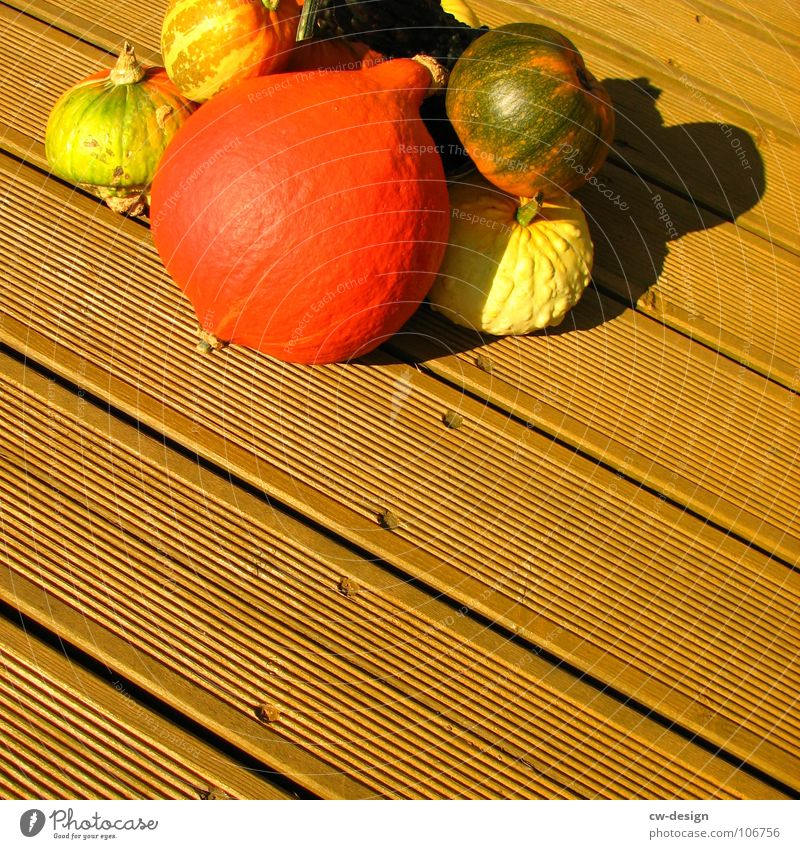 du wolle rose kaufn!? grün Pflanze rot Gesicht gelb Holz süß Kochen & Garen & Backen rund Gastronomie Gemüse Handel Tradition Halloween verschönern Holzfußboden