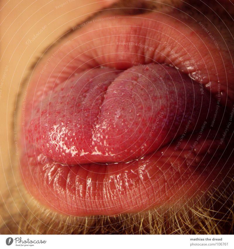 ZUNGE rot Ernährung Wärme rund Lippen Physik Falte Punkt feucht Bart frech Furche Zunge Sinnesorgane Geschmackssinn Organ