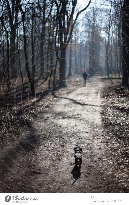 nase vorn Hund Mensch Natur Baum Erholung Landschaft ruhig Freude Tier Winter Wald Umwelt Herbst Wege & Pfade Glück gehen