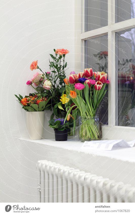 Vielen Dank, für die Blumen... weiß Blatt Haus Fenster Innenarchitektur Blüte Feste & Feiern Lifestyle Wohnung Freizeit & Hobby Raum Häusliches Leben