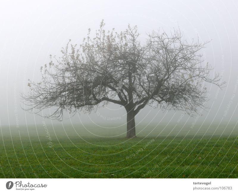 Baum im Nebel feucht kalt schön Natur Trauer Herbst nass Wiese grün frisch Winter Schweiz Landschaft Tree landscape old Fog wet cold Traurigkeit
