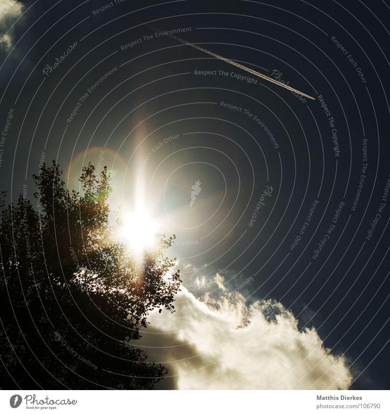 STARLIGHT EXPRESS Licht Gegenlicht Wolken Flugzeug Blende Baum dunkel Sommer Herbst Herbstbeginn Mittag Zeit Absturz Flugzeugunglück Desaster Apokalypse