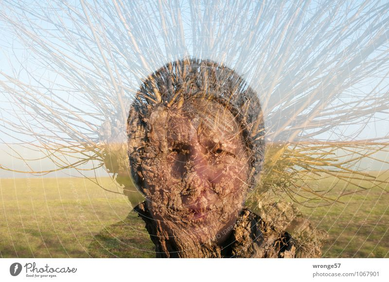 Struwwelkopf Mensch feminin Frau Erwachsene Weiblicher Senior Kopf Gesicht 1 45-60 Jahre Baum Weide Blick blau braun mehrfarbig grün bizarr Porträt Mütze