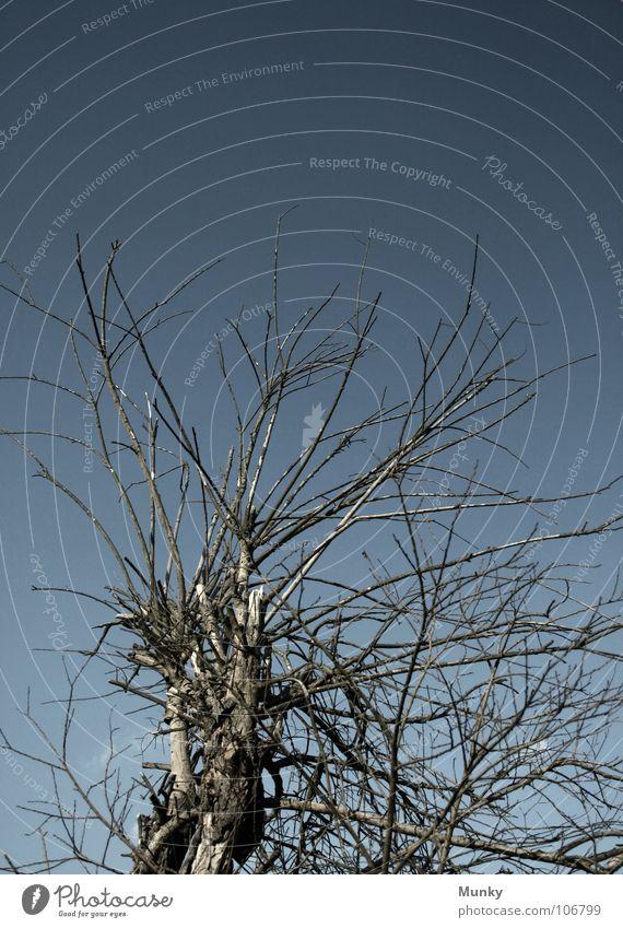 verkalkt? alt Himmel weiß Baum blau Pflanze grau Sträucher Charakter hart Weisheit Schleier