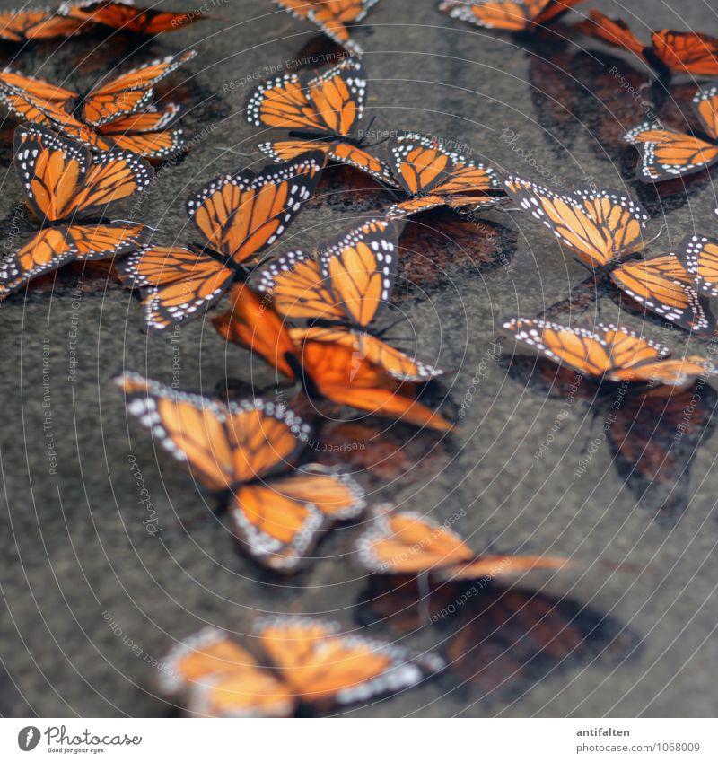 Edelfalter Freude schwarz Stil Glück grau orange Design liegen Dekoration & Verzierung elegant Fröhlichkeit ästhetisch Lebensfreude Papier Zeichen Kitsch