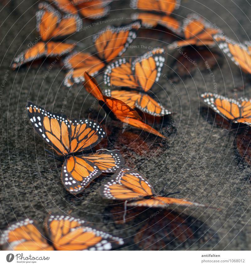 some butterflies Lifestyle Stil Freizeit & Hobby Kunst Skulptur Mauer Wand Schaufenster Tier Wildtier Schmetterling Tiergruppe Schwarm Papier