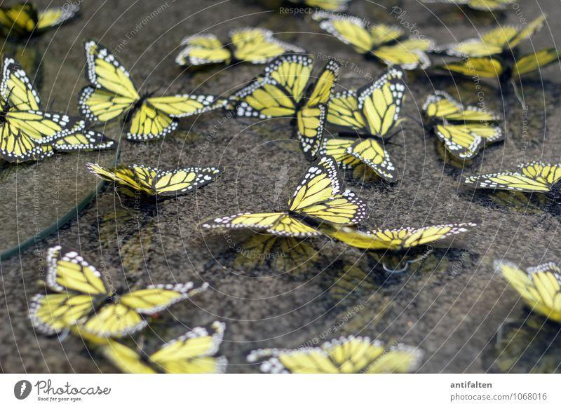 Frische Falter Lifestyle Design Freizeit & Hobby Handarbeit Ostern Beruf Dekorateur Schaufenster Schaufenstergestallter Frühling Schmetterling Flügel Tiergruppe